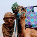 Randonnées avec chameaux - Maroc