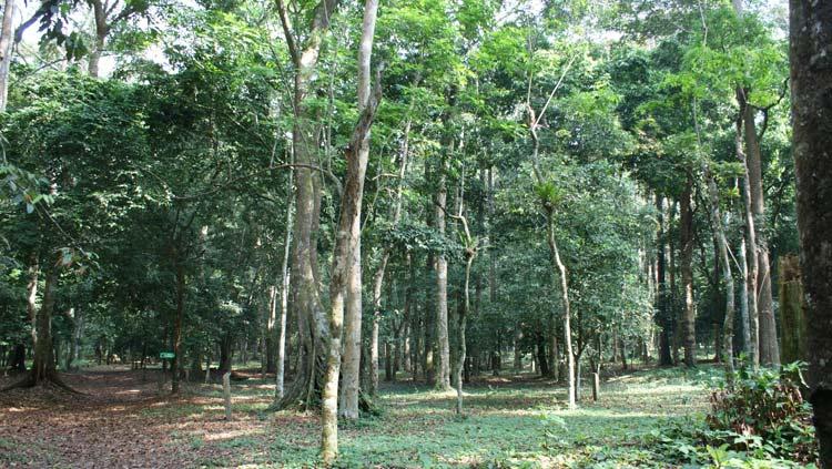 Plusieurs espèces d'arbres