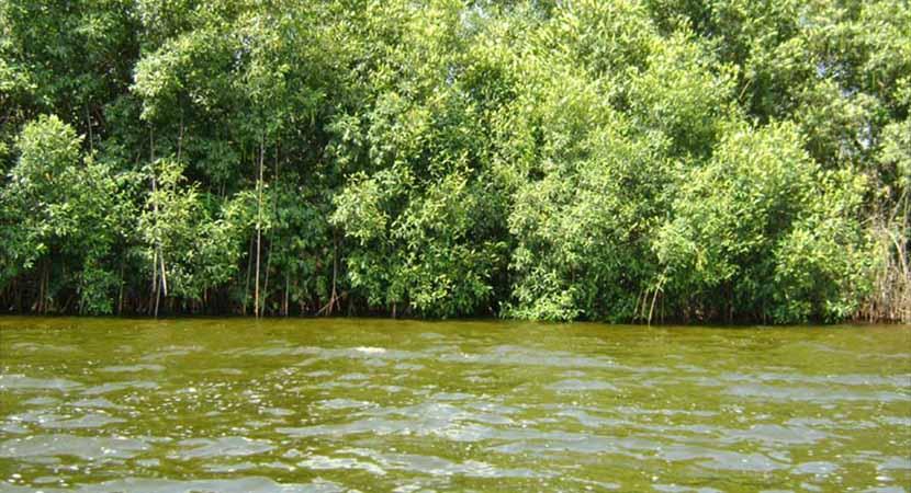 Mangrove du Parc